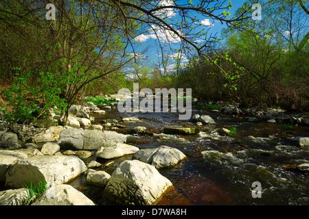 El somero rápidos de un arroyo cascadas de rocas y piedras blancas en el bosque. Imagen De Stock