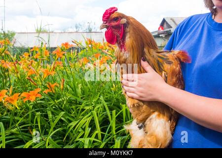 Cerca de la mujer que sostiene el gallo en la granja Imagen De Stock
