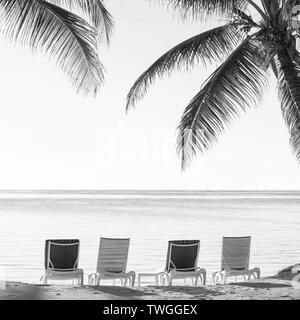 Palmeras en la playa tropical con tumbonas en la arena con vistas al agua en impresionante blanco y negro Imagen De Stock