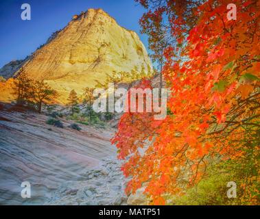 El maple y pico de Zion, el Parque Nacional de Zion, Utah Acer sp. Imagen De Stock