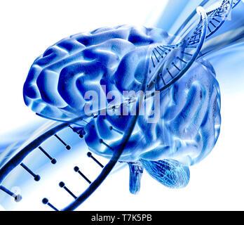 3D Render de formación médica con la hebra de ADN y el cerebro humano Imagen De Stock