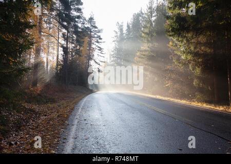 Paisaje rural con Forest Road en rayos de sol, otoño misty Lohja, Finlandia Meridional, Finlandia Imagen De Stock