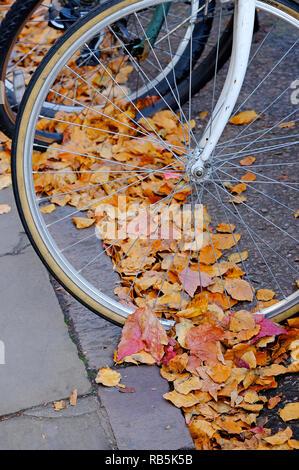 Rueda de bicicleta en hojas de otoño en la carretera Imagen De Stock