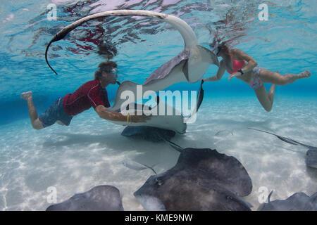 Los buceadores interactuar con manta rayas sureñas en la arena, Gran Caimán Imagen De Stock