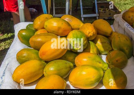 De Hanalei, Hawai, Kauai, mercado de granjeros, fruta en la mesa Imagen De Stock