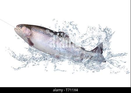 Los peces 123 Imagen De Stock