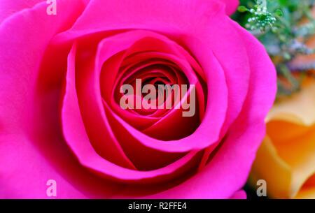 Cerca de pétalos de rosa roja Imagen De Stock