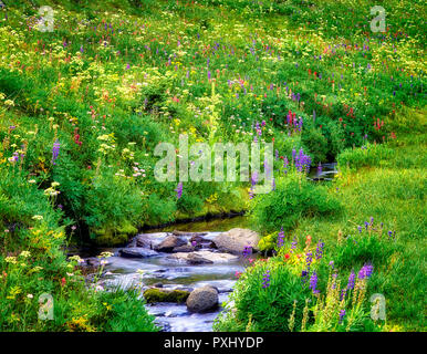 Flores y arroyo. Bird Creek Meadows, Washington. Imagen De Stock