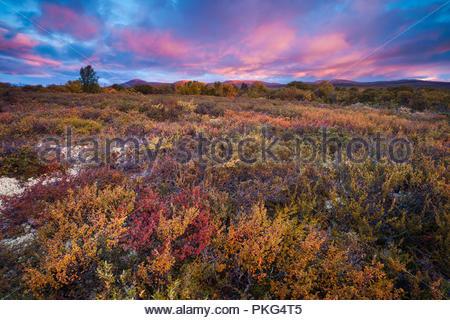 Dovre, Noruega, 13 de septiembre de 2018. Colores de otoño en la reserva natural Fokstumyra Dovre, Noruega. Crédito: Oyvind Martinsen/ Alamy Live News Imagen De Stock