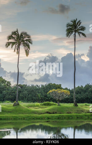 De Hanalei Bay, Hawai, Kauai Kauikeolani Estate, Palmeras, nubes, césped, estanque Imagen De Stock