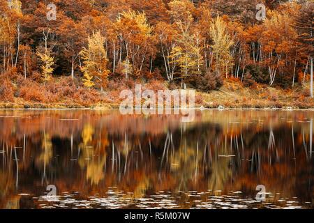 El follaje de otoño reflexión en Jordania Pond, Maine Imagen De Stock