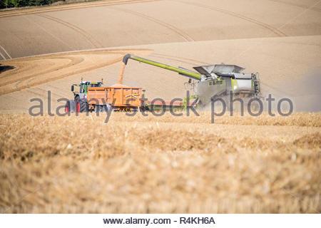 Vista de la cosecha de verano de corte de cosechadora de trigo y cultivos de campo de remolque del tractor en la granja Imagen De Stock