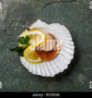 Las materias crudas y vieiras en cockleshell y limón sobre fondo gris Imagen De Stock