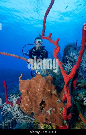 Scuba Diver paradas para explorar un afloramiento de diferentes esponjas. Imagen De Stock