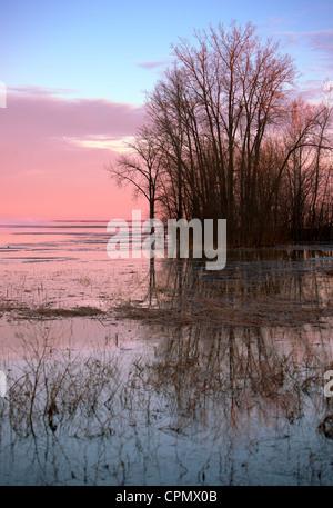 Rosa temprano por la mañana las nubes en un cielo azul a lo largo de aguas tranquilas con deshojado árboles. Imagen De Stock