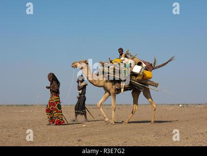 Afar personas encabezando una caravana de camellos, la región de Afar, en Etiopía, Semera Imagen De Stock
