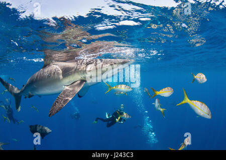 Fotógrafo submarino con tiburón sedoso. Imagen De Stock