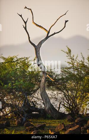 Temprano por la mañana en la orilla del lago de la Cienaga de las macanas de humedales, la provincia de Herrera, República de Panamá. Imagen De Stock