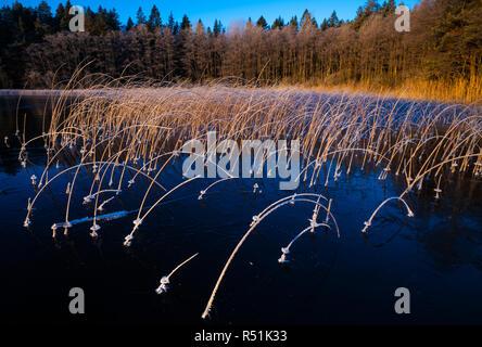 A la luz de la mañana temprano en el invierno en el lago Vansjø Hvalbukt, Østfold, Noruega. Imagen De Stock
