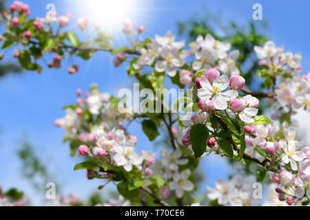 Primavera 114 Imagen De Stock