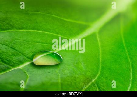 Macro de una gran gota de agua de lluvia transparente sobre una hoja verde Imagen De Stock