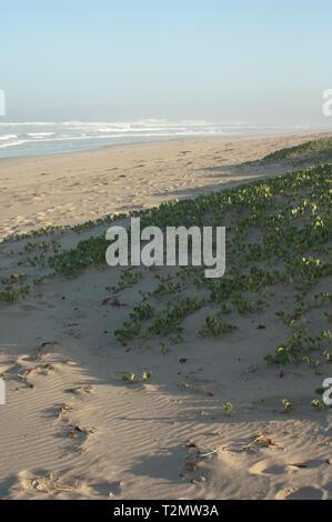 Dunas de arena en la playa de Surf cerca de Lompoc, California central coast. Fotografía Digital. Imagen De Stock