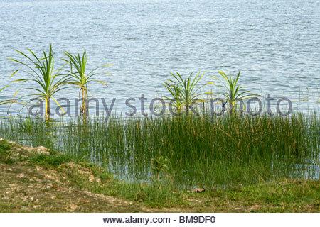 Un escenario tropical del lago VELLAYANI, Kerala Imagen De Stock