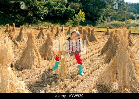 Chica cosechar arroz Imagen De Stock