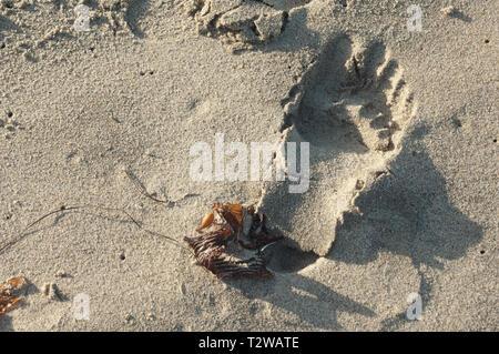 Huella en la arena de playa de Surf cerca de Lompoc, California central coast. Fotografía Digital. Imagen De Stock