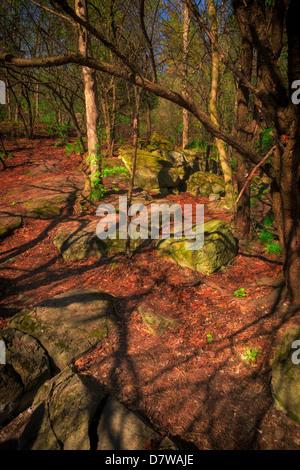Una pequeña compensación rocoso en un bosque de Ontario en el tiempo de primavera, con grandes rocas musgosas. Imagen De Stock