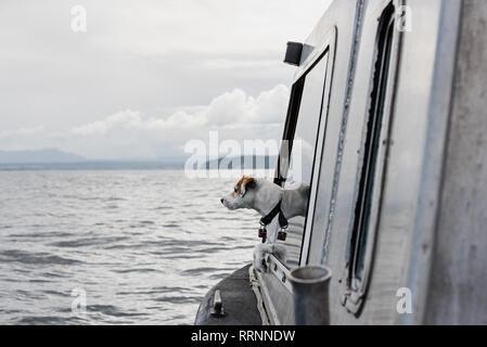 Lindo perro mirando por la ventana en barco en el río, Campbell River, British Columbia, Canadá Imagen De Stock