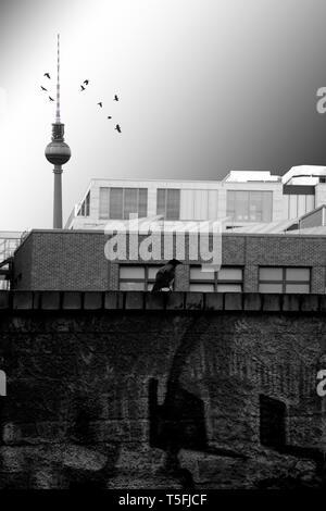 Un cuervo parado sobre una oscura y golpeando la pared con graffiti antes una serie rectangular edificio comercial y la torre de televisión. Imagen De Stock
