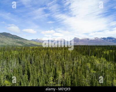 Vista escénica de árboles cerca de la montaña Imagen De Stock