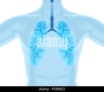 Los pulmones limpios y sanos.3D ilustración Imagen De Stock