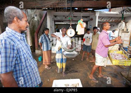 UNAWATUNA mercado de pescado; los pescadores su captura diaria de pesaje Imagen De Stock