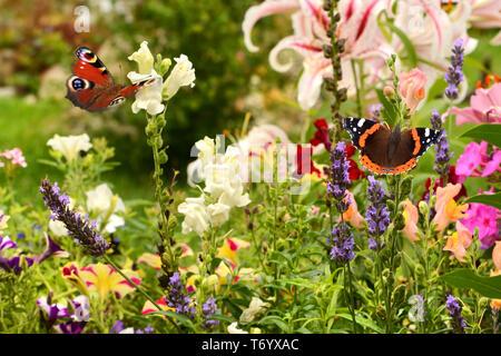 504 mariposa Imagen De Stock