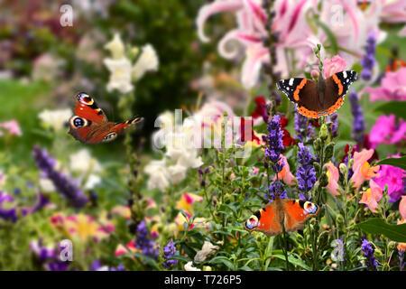 Mariposas Imagen De Stock