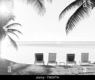 Puesta de sol a través de palmeras en una playa tropical con tumbonas en la arena impresionante en blanco y negro Imagen De Stock
