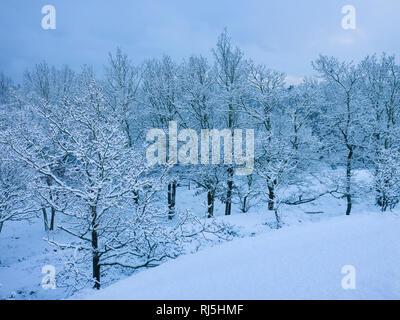 Bosque en invierno Imagen De Stock