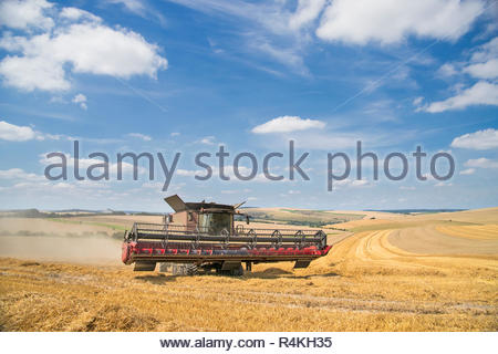 Vista de la cosecha de verano de corte de cosechadora de cosechas en el campo de trigo y cielo azul en la granja Imagen De Stock