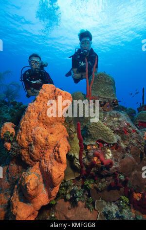 Los submarinistas exploran un arrecife en Gran Caimán. Imagen De Stock