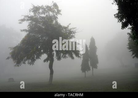 SSK 856 - hermosa atmósfera neblinosa mañana temprano en el invierno con los árboles en el jardín del complejo occidental templos Khajuraho, Madhya Pradesh, India Asia el 16 de diciembre de 2014 Imagen De Stock