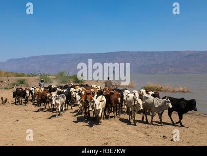 El ganado va a beber en el lago afambo, la región de Afar, en Etiopía, Afambo Imagen De Stock