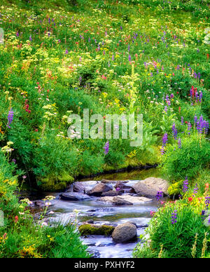 Stream en Ave Creek Meadows. Washington Imagen De Stock