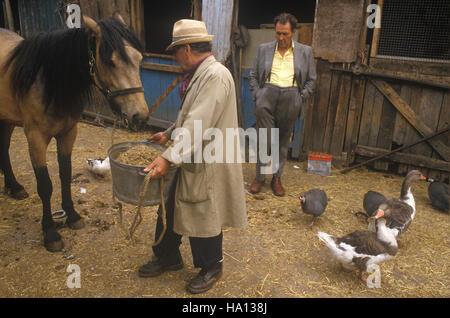 Patio de Caballos, Hackney 1980 Londres se tambaleaba rag y hueso rag n hueso, hombre. 1980 Homero SYKES Imagen De Stock