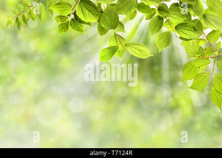 Primavera 323 Imagen De Stock