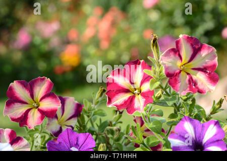 Flores 648 Imagen De Stock