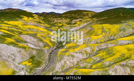 El Wildflower florece en el temblor de tierra, el Monumento Nacional Carrizo Plain, California Imagen De Stock