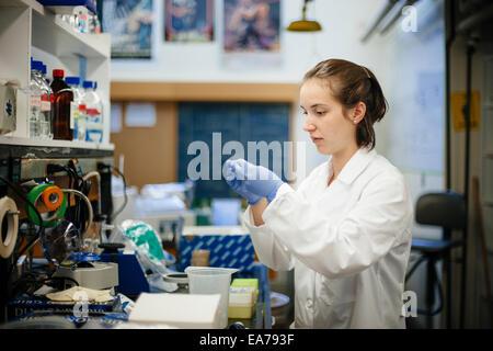 Estudiante de ciencias en el laboratorio poniendo en guantes de goma Imagen De Stock