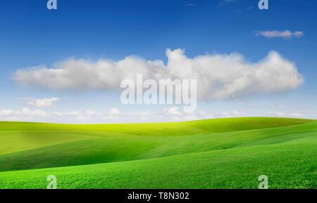 Campo de hierba y cielo azul perfecto Imagen De Stock